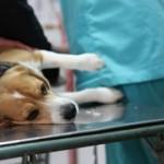 Dog euthanasia